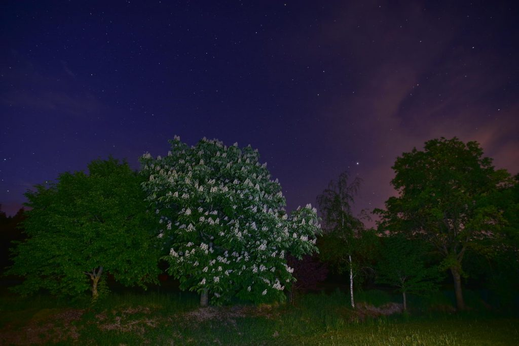 Nachthimmel über Kastantienbäumen