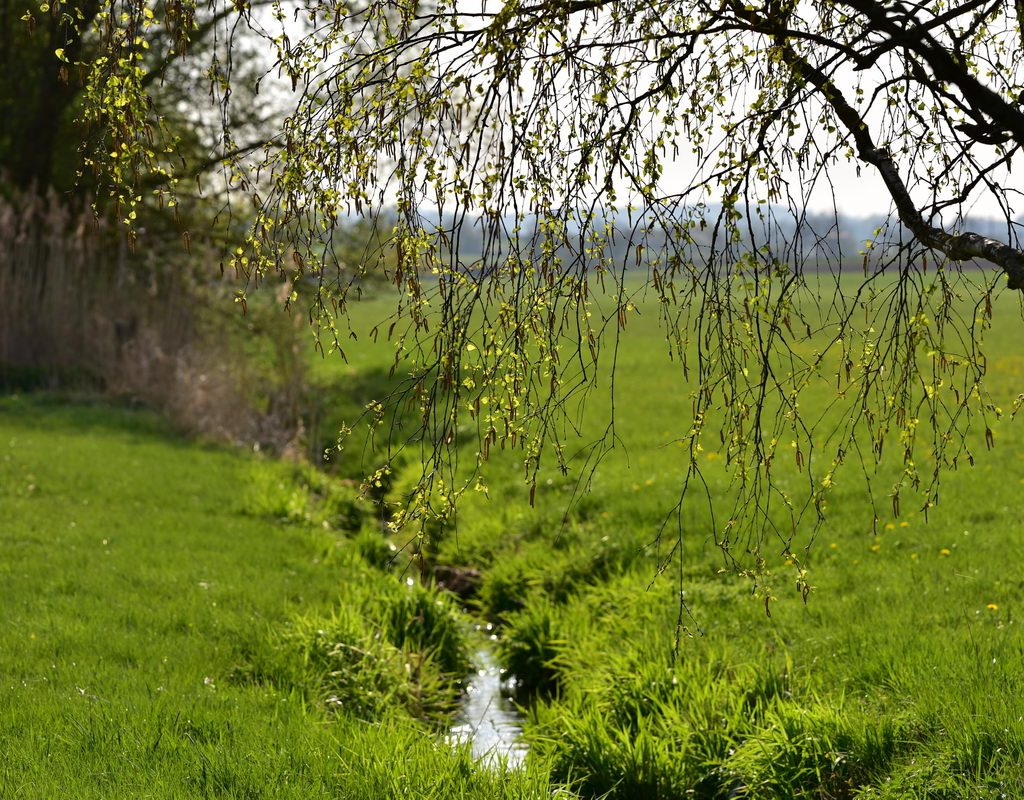 Frühling An Der Sulzach